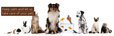 pet sitting pet sitting and cat sitting services