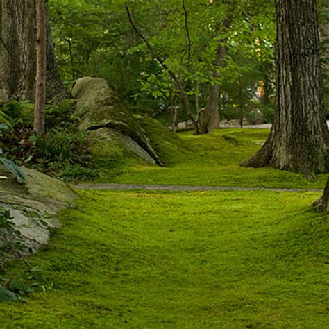 moss backyard make a statement plant a moss lawn southern living