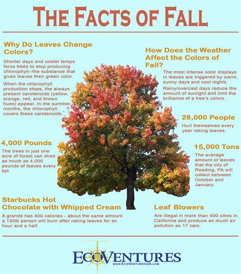 ecoventures why the leaves change colors and other fun facts about fall