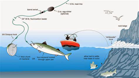Umpan Mancing Dilaut warta pancing ragam teknik cara memancing laut konvensional