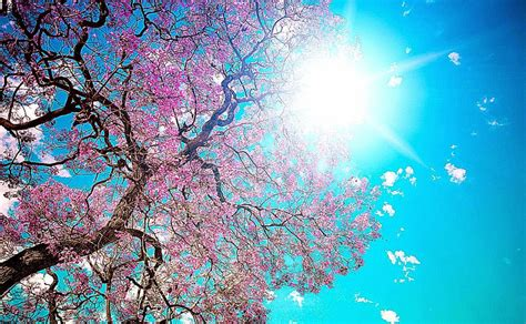 microsoft background themes spring hd spring wallpapers free best hd wallpapers