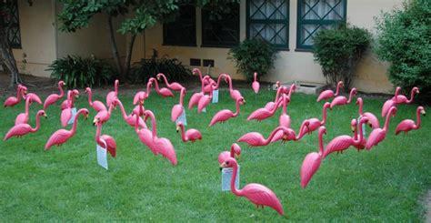 pink flamingos in the front yard flamingo flocking