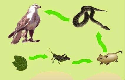 cadenas alimentarias de animales educaci 211 n ambiental unidad ii cadenas alimentarias y