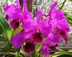 black gold growing orchids indoors for winter color black gold