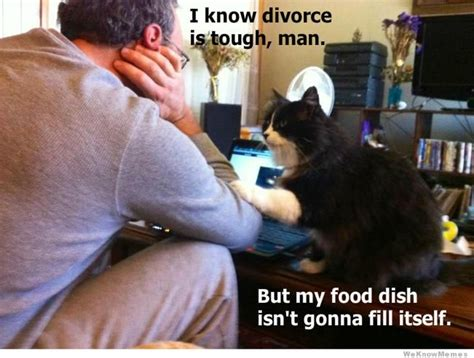 Funny Divorce Memes - sympathetic cat weknowmemes