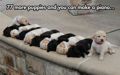 puppy everywhere puppies everywhere the meta picture