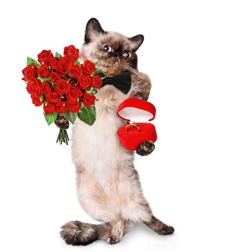 cat valentines we make of valentine s day cats in stock photos catster