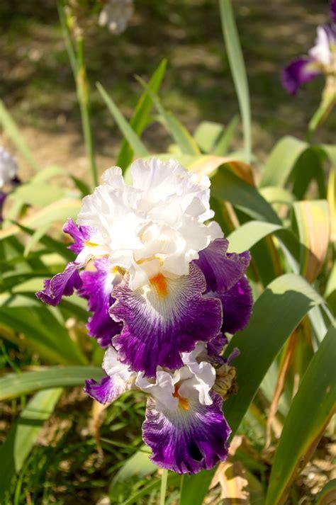 giardino iris firenze il giardino dell iris a firenze lonely traveller