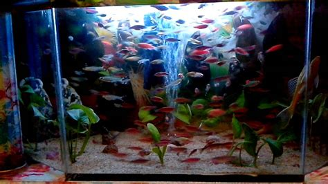 desain aquarium air tawar ikan hias air tawar youtube