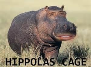 Hippo Memes - hippo meme memes celebrity memes lol funny humor lol
