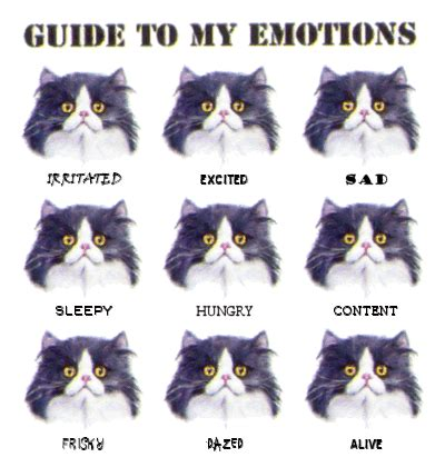 identifying emotions of your cat and/or dog | inklings and