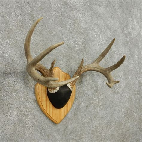 Deer Antler Ls For Sale by Whitetail Deer Antler Plaque Mount For Sale 13595 The