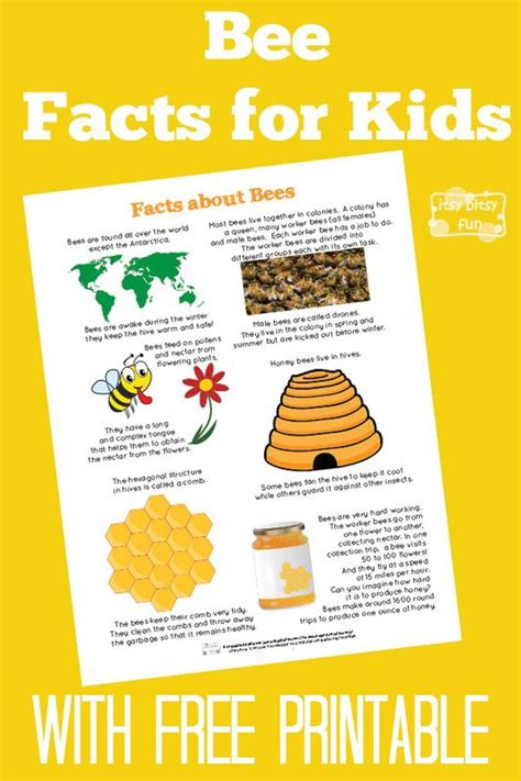 five bizzy honey bees the and factual of the honey bee captivating educational and fact filled picture book about bees for toddlers children and adults books best 25 bee facts for ideas on