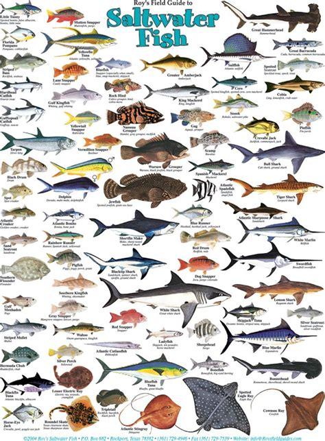 printable fish poster saltwater fish identifier north carolina saltwater fish