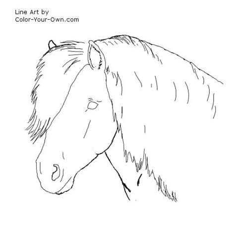 shetland pony coloring pages shetland pony headstudy coloring page