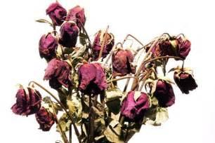 Keith Richards Dead Flowers - gallery for gt dead flower cartoon