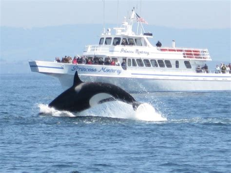 monterey whale watching boats princess monterey whale watching yelp