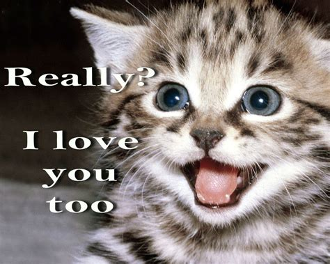 Grumpy Cat Meme Love - cat meme quote funny humor grumpy kitten mood love