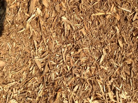 wood chips vs mulch wood boring insects