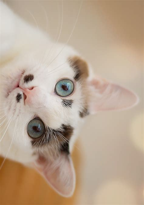 8 Ways Your Cat Shows It You by 8 Surprising Ways Your Cat Says Quot I You Quot