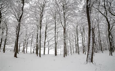 Christmas Scene Wall Murals fondo de pantalla inglaterra invierno nieve en el bosque hd