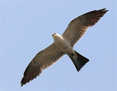 hidden new jersey let s go fly a mississippi kite