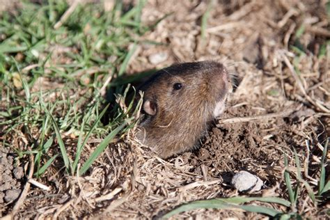 Ratten Im Garten Bekämpfen 2156 by Rattengift Haus Garten Unkrautvernichter Shop De