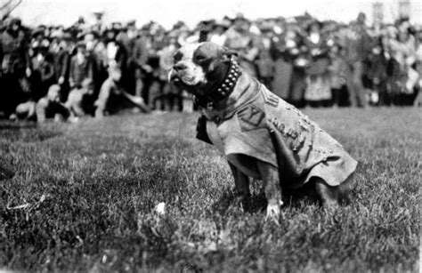 Sergeant Stubby Medals The Story Of Sergeant Stubby Wwi S Most Decorated Weasel Zippers