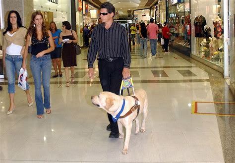 Cortical Blindness Treatment Guide Dog Wikipedia