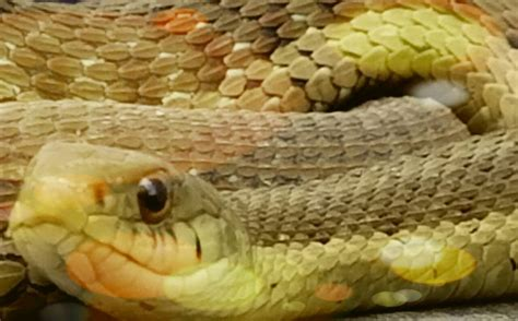 snake in my backyard the snake in my backyard by akolojek on deviantart