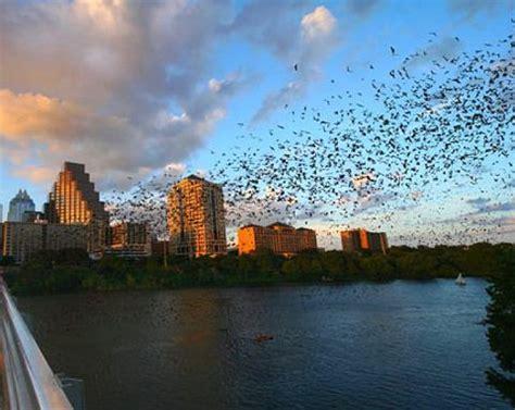 bat boat austin austin bats flying at sunset under the congress street