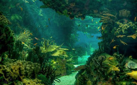 descargar imagenes en resolucion 4k descargar 2560x1600 mar paisaje fondos marinos submarino