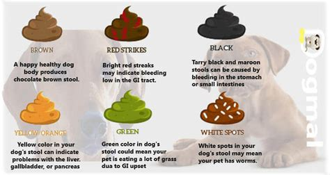 why is my puppy diarrhea black food coloring cause green stools irritable bowel causes