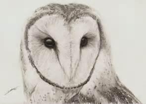 Barn Owl By Ambr0 On Deviantart Barn Owl Drawing