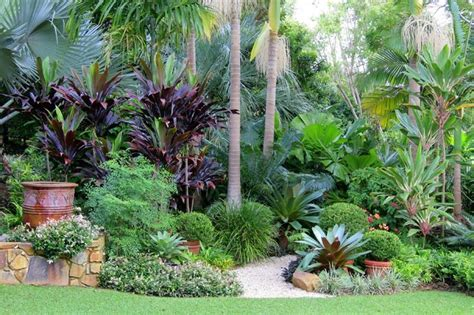 Subtropical Garden Ideas Trachelospermum Jasminoides Variegatum Nandina Domestica Bismarkia Palm Cordyline Negra