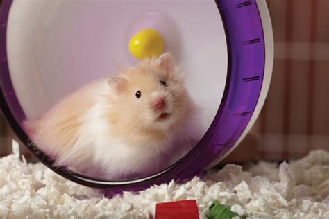 creating  fun play space  small pets