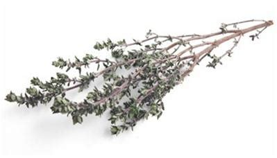 thyme substitutes ingredients equivalents gourmetsleuth