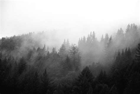 background ig black and white forest tumblr google search for a