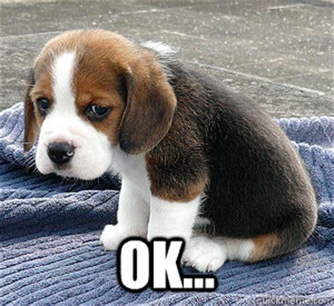 Sad Ok Meme - ok so sad puppy quickmeme
