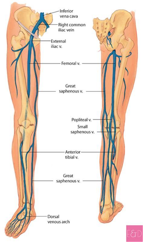 vasi arti inferiori trombosi venosa profonda cause sintomi e cura estetica