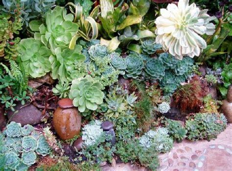ver jardines jardines con plantas suculentas plantas