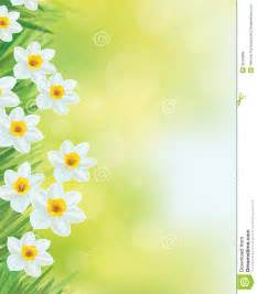 vector daffodil flowers frame royalty free stock photos