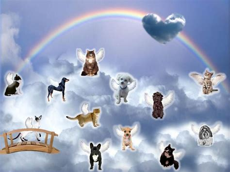 bridge puppies dogs and cat at rainbow bridge pictures photos and images for