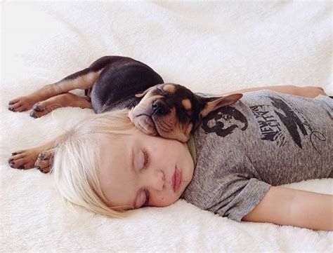 sleeping with dogs 30 sleeping with dogs and its the most adorable thing you will see today the