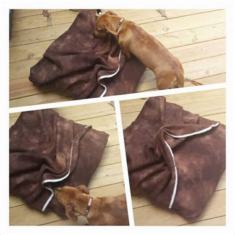 dog bed attached to bed i ll take my wine in a sippy cup diy dog quot envelope quot bed or dog beds with