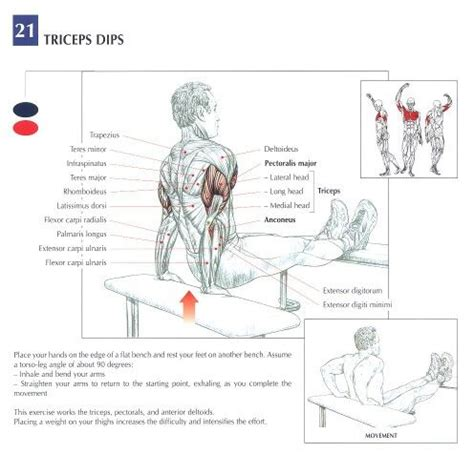 bench dips muscles bench dips peak fat loss and fitness