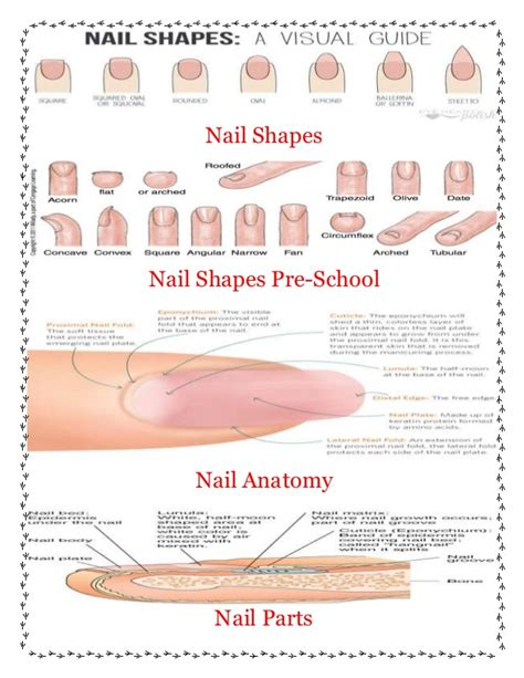8 Nail Shapes And How To Choose The One For You by Nail Shapes