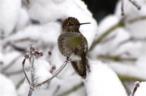 attracting hummingbirds in winter birds and blooms