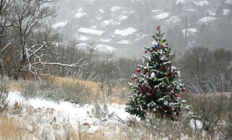 christmas tree farm utah ogden 2013 cheer around the world