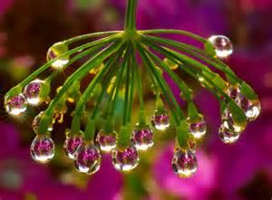 Raindrop Chandelier Reflection Arts